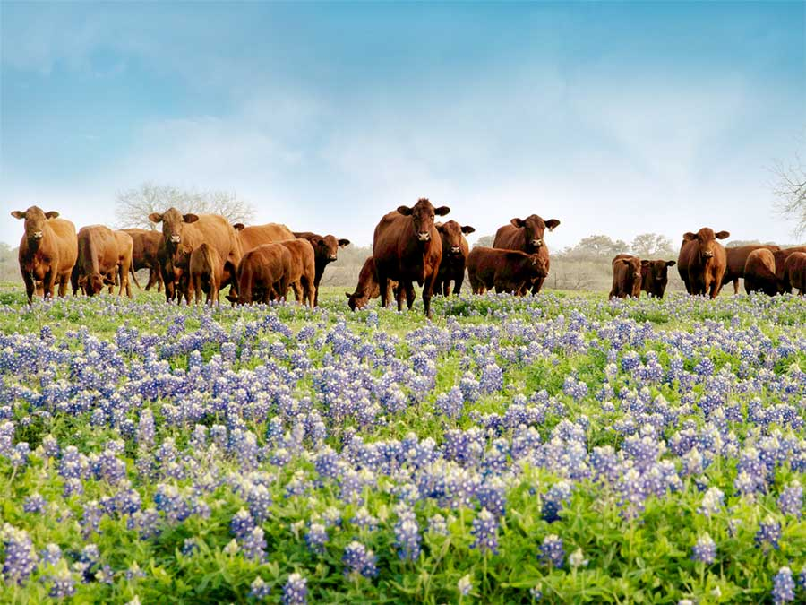 Texas Farm Credit 2020 Photo Contest Results