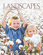 Landscapes Winter 2019